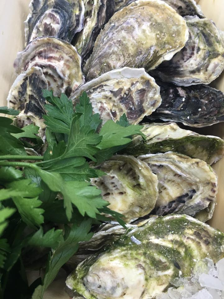 Oysters - maldons
